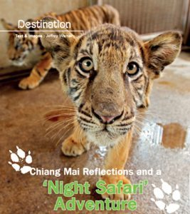 Night Safari Chiang Mai
