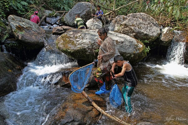 indigenous lahu hilltribe women and youth are holding blue nets and fishing in the river