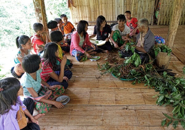 indigenous lahu hilltribe man is teaching youth about traditional medicine