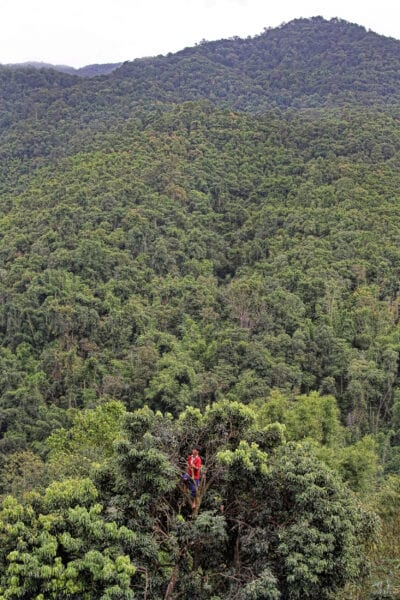 a karen hilltribe man is in the forest and standing at the top of a tree